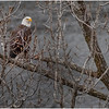 New York Cohoes Falls Overlook Eagle 9 December 2020