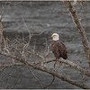 New York Cohoes Falls Overlook Eagle 12 December 2020