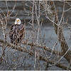 New York Cohoes Falls Overlook Eagle 5 December 2020