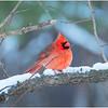 New York Delmar Cardinal 15 December 2020