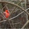 New York Delmar Cardinal 10 December 2020