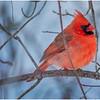 New York Delmar Cardinal 11 December 2020