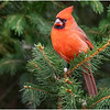 New York Delmar Cardinal 4 December 2020