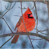 New York Delmar Cardinal 12 December 2020