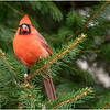 New York Delmar Cardinal 3 December 2020