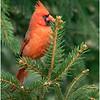 New York Delmar Cardinal 7 December 2020
