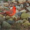 New York Delmar Cardinal 5 December 2020