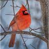 New York Delmar Cardinal 14 December 2020