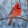 New York Delmar Cardinal 13 December 2020