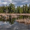 New York Berne Wetlands 4 April 2020