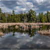 New York Berne Wetlands 3 April 2020
