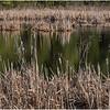 New York Berne Wetlands 5 April 2020