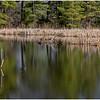 New York Berne Wetlands 6 April 2020