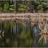 New York Berne Wetlands 2 April 2020