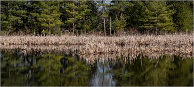 New York Berne Wetlands 1 April 2020
