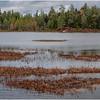 Adirondacks Bear Pond 2 October 2020