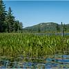 Adirondacks Bog River 6 Lows Ridge July 2020