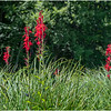 Adirondacks Bog River 14 July 2020