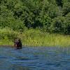 Adirondacks Bog River 9 Sadie July 2020
