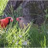 New York Delmar Mr  and Mrs  Cardinal 1 May2020