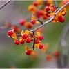 New York Waterford Peebles Island Berries 4 November 2020