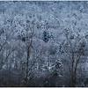 Voorheesville NY Heldeberg Escarpment 16 April 2020