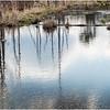 Voorheesville NY Black Creek Marsh 1 April 2020