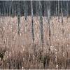 Voorheesville NY Black Creek Marsh 4 April 2020