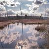 Voorheesville NY Black Creek Marsh 6 April 2020