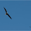 New York Cohoes Falls Eagle 1 February 2021