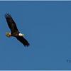 New York Cohoes Falls Eagle 2 February 2021