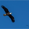 New York Cohoes Falls Eagle 4 February 2021