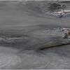 New York Cohoes Falls Eagle 11 February 2021