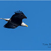 New York Cohoes Falls Eagle 6 February 2021