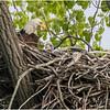 New York Green Island Eagle 1 May 2021