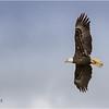 New York Green Island Eagle 5 May 2021