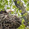 New York Green Island Eagle 1A May 2021
