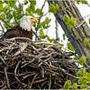 New York Green Island Eagle 2A May 2021