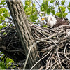 New York Green Island Eagle 4 May 2021