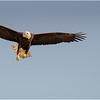 New York Green Island Eagle 6 May 2021