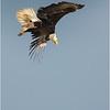 New York Green Island Eagle 10 May 2021