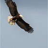 New York Green Island Eagle 8 May 2021