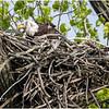 New York Green Island Eagle 3 May 2021