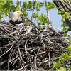 New York Green Island Eagle 2 May 2021