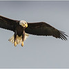New York Green Island Eagle 7 May 2021