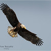 New York Green Island Eagle 9 May 2021