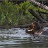 Adirondacks Chateaugay Lake Beaver 16 June 2021