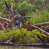 Adirondacks Chateaugay Lake Beaver 4 June 2021