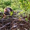 Adirondacks Chateaugay Lake Beaver 19 June 2021