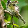 New York Cohoes Peebles Island Chickadee 4 August 2021